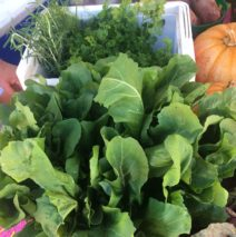 Produce Picks for February 25