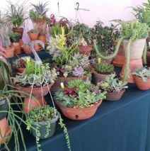 Horti-Culture Plants + Delights