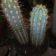 Cactus and Exotics