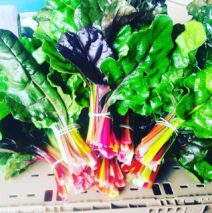 Produce Picks for March 23