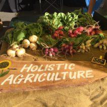 Produce Picks for February 1