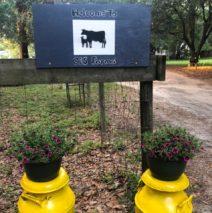 Brown Cow LLC/C&S Farms