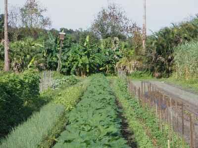 Eco Farm