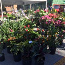 Gonzalez Plants