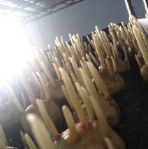 Farm to Table Saffron